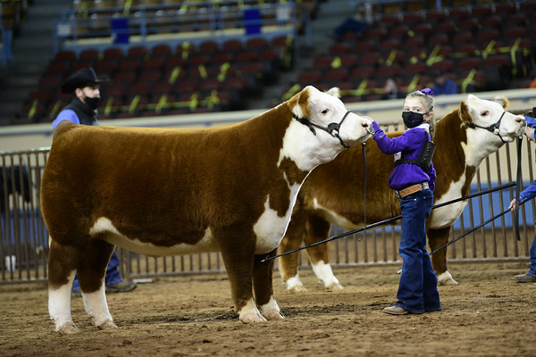 Market Steer Ring Shots