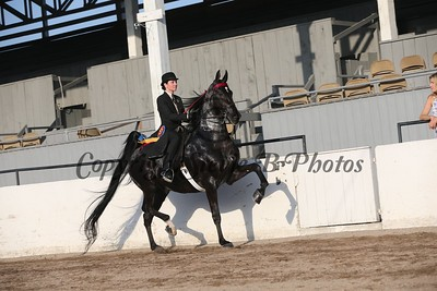 30. Adult 3 Gaited Show Pleasure Championship