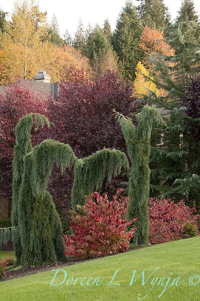 Sequoiadendron giganteum 'Pendulum'_1937.jpg