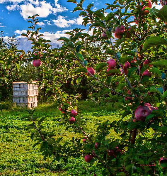 Brookdale Fruit Farm1.jpg