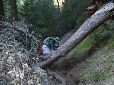 Baldy Bear Canyon 4-16-2011