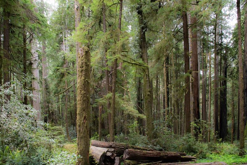 redwoodsFin-0978.jpg