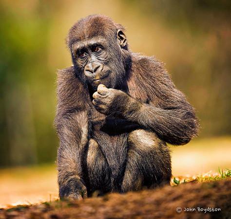 Primates - ATL Zoo