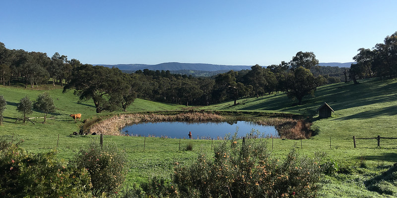 The view from the first house we lived in - Smiths Gully near Melbourne