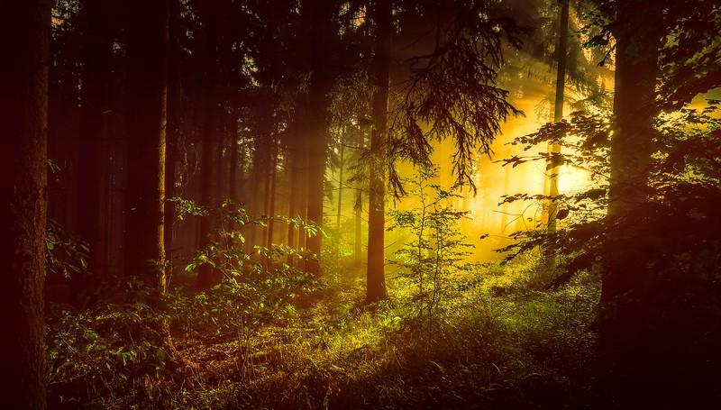 Forest Shadows-127.jpg