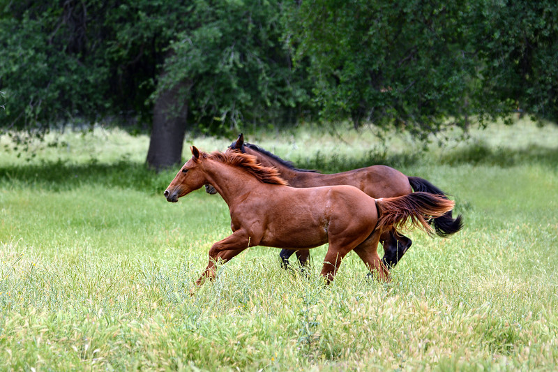 Fairlea 2019 Horses