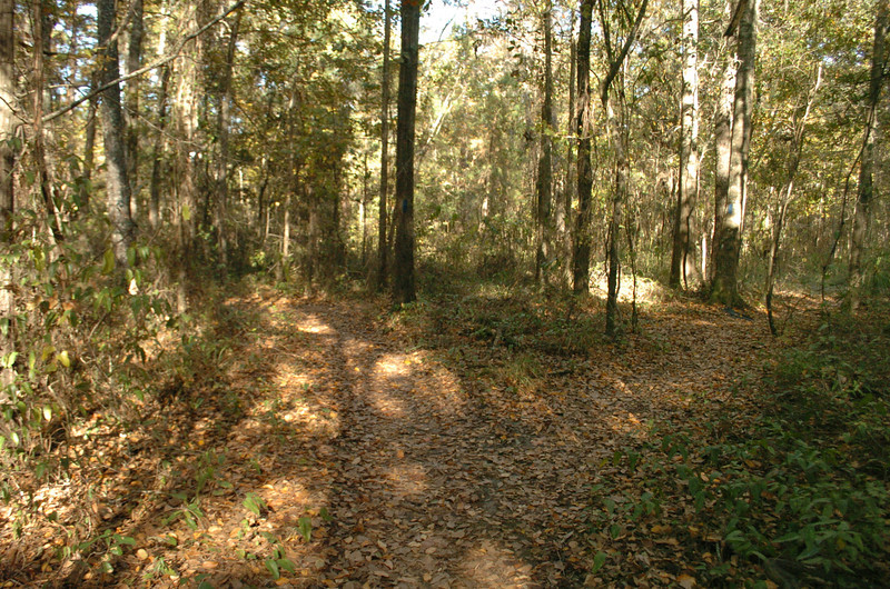 Note that here, we stay left. The trail to the right is access to the gas pipeline easement and back to Forestmeadows parking lot.