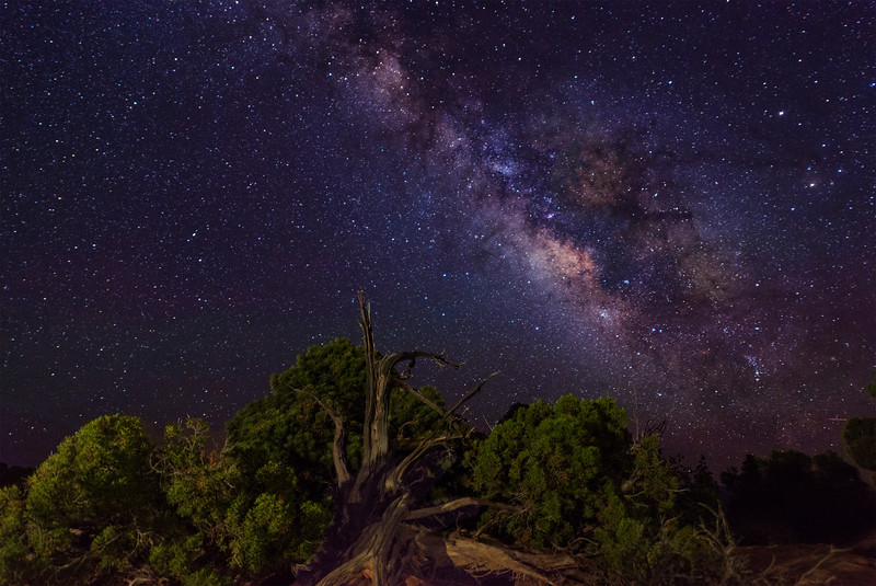 Grand View Milky Way Tree