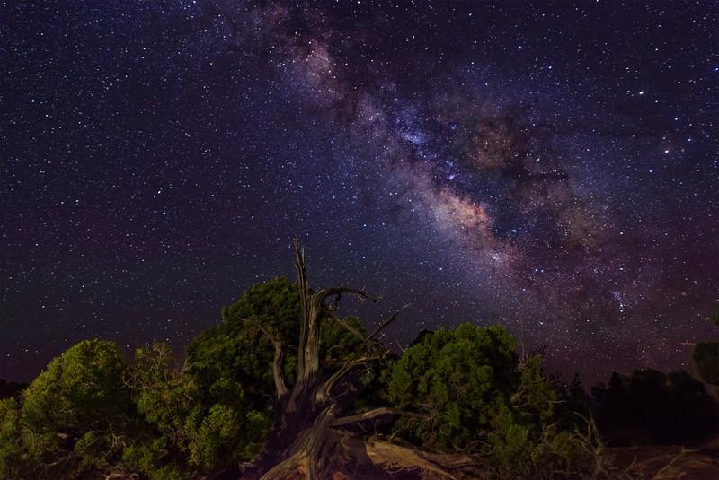 Grand View Milky Way Tree
