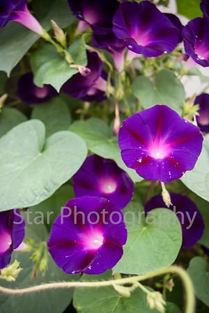 Pretty Flowers Downtown 08-29-13