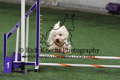 Lhasa Apso/Biewer Terrier AKC Agility Trial October 30-November 2
