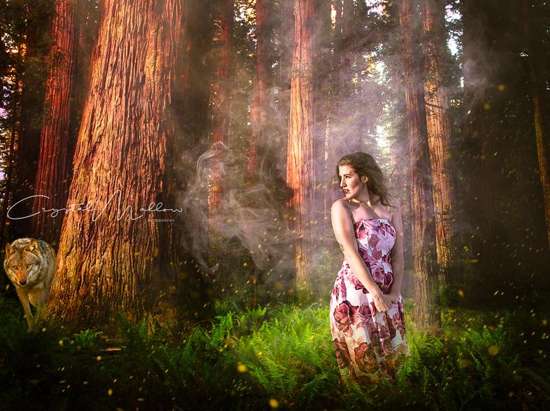 Redwood-Forest-1 copy-3.jpg