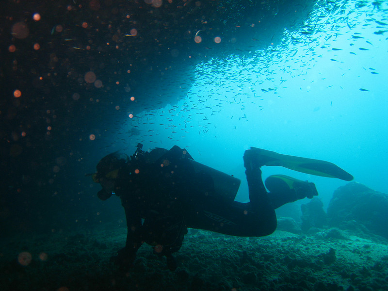 Diving in the Galapagos (366 of 392)