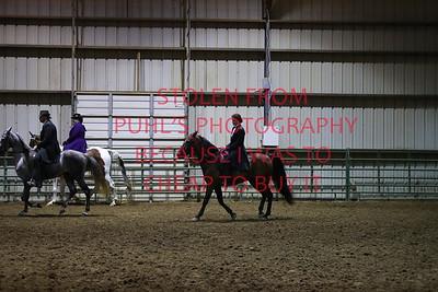 Thursday - Saddle Horse Pleasure Adult