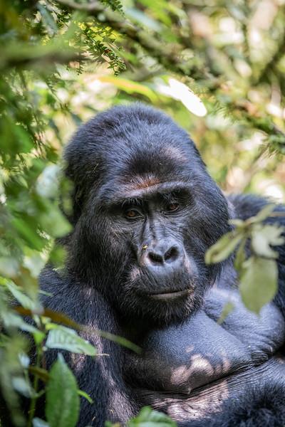 Uganda_T_Gor-294.jpg