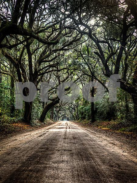 18 x 24 oak tree road.jpg