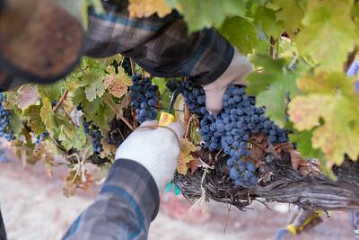 2016 Red Hills Second Hand Pick Harvest