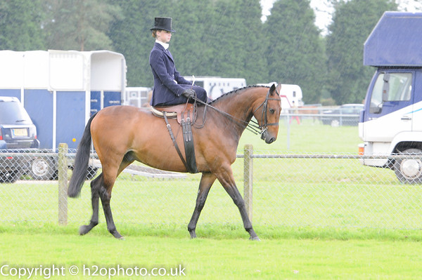Area 8 SSA - Summer Show2 (Ardingly - 25-Jun-16)