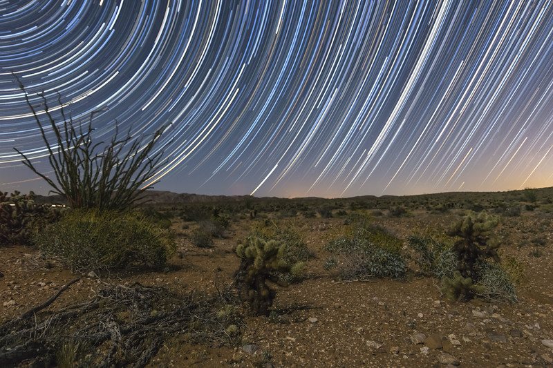 Star Trails and Ocotillo and Cholla in Jojoba Wash