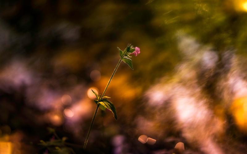 The Magic of Light-417.jpg