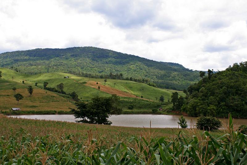 Cornfields and small reservoir in Ban Phudu (บ้านภูดู่)