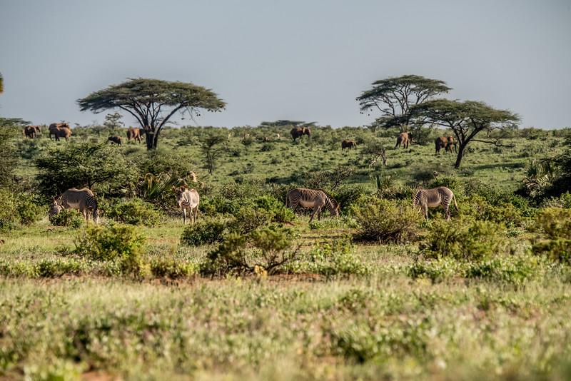 Samburu (5 of 70).jpg