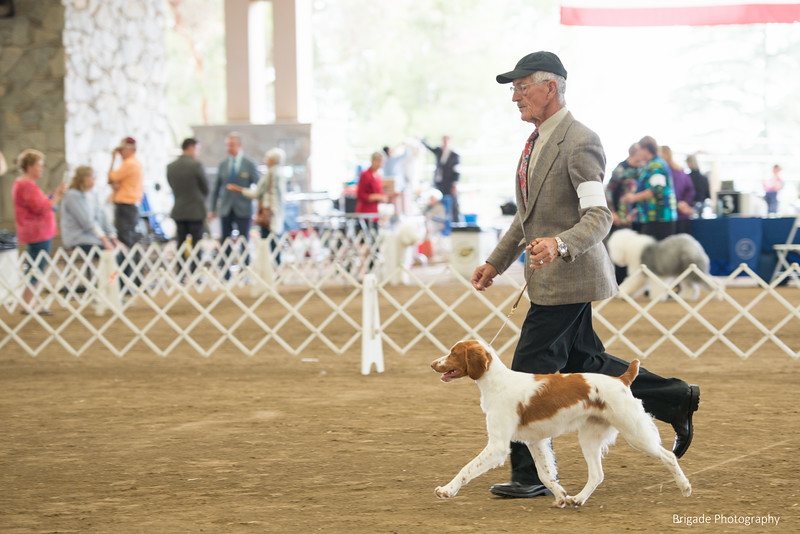 2019 Malibu Kennel Club-9741.jpg