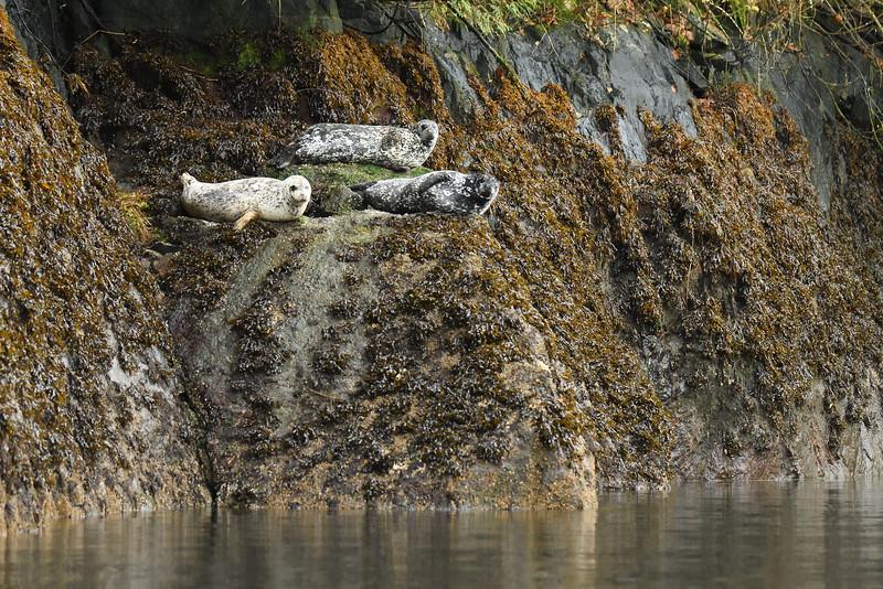 Seals in the Khutze