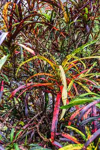 Maui-IaoNeedle-Plants