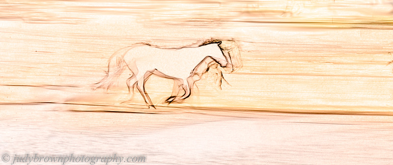 Panning at White Stallion Ranch 2014