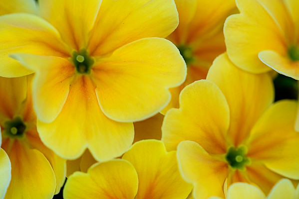 Floral & Fauna