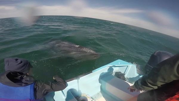Baja Whale Trip 2018