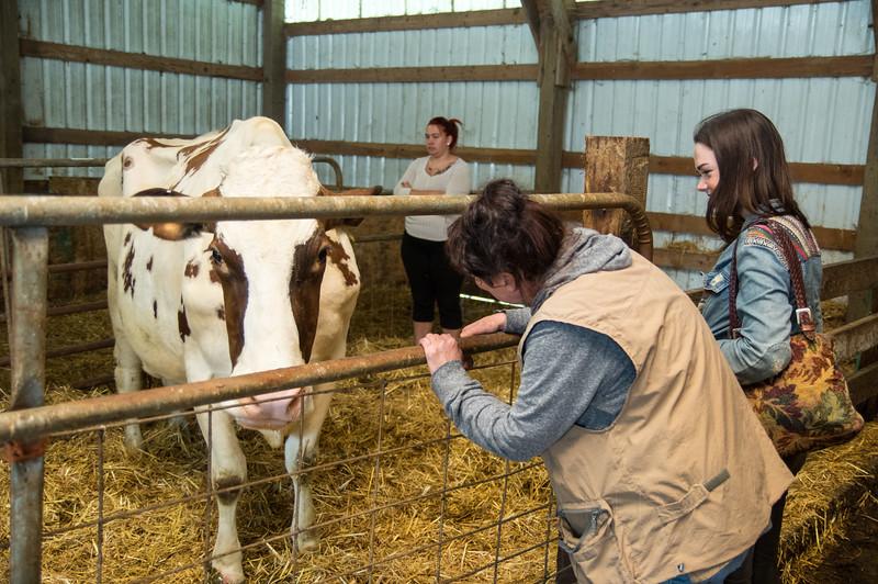 Bennett-Farm-buttercup-009.jpg