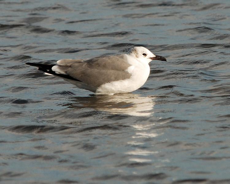 Goose Island 012009 122.jpg