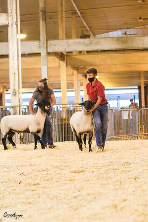 2020 IL Dept. of Ag Youth Livestock Expo