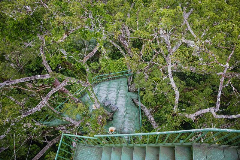 Napo Wildlife Center - Yasuni National Park - Lina Stock