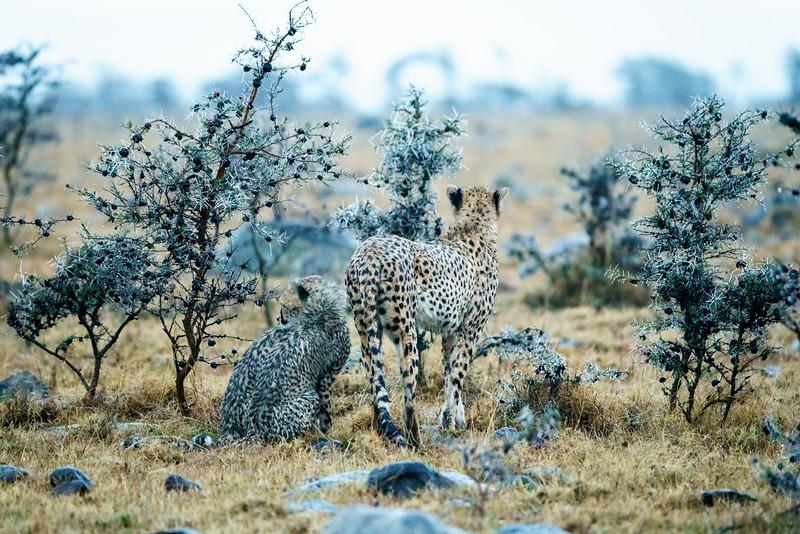 Kenya 2015-09335.jpg