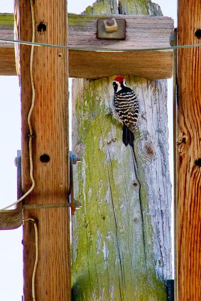 Backyard_Birds-09.jpg