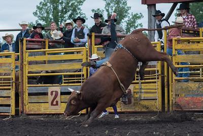 Bulls Friday 2013