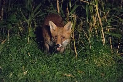 Animals Wild UK