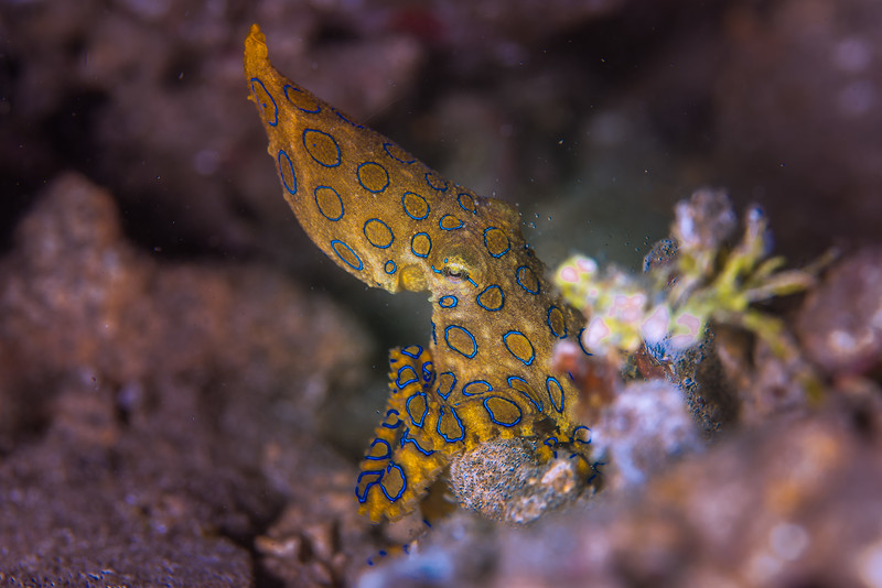 Taken at Dodoku Jetty divesite in Ternate Island, North Maluku, Indonesia during our 8D7N excursion in March 2018