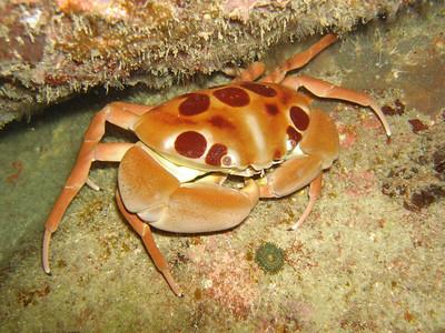 Diving: Tioman and Aur