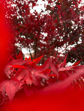 Photography Club's Fall Foliage Contest