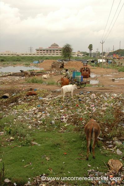 Trashscape: Madurai, India