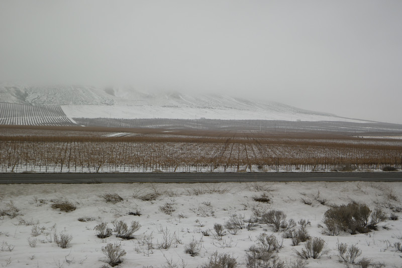 Vineyards Near Richland, WA