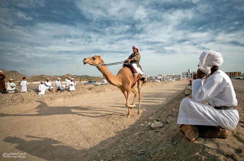 Camel Race  (60).jpg