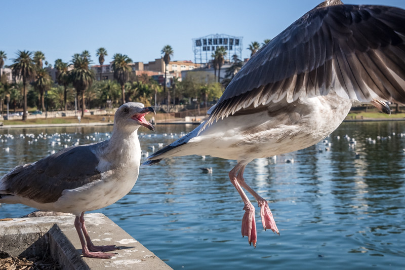 "November 22 -""No, no. don't leave me!"" - MacArthur Park, Los Angeles.jpg"