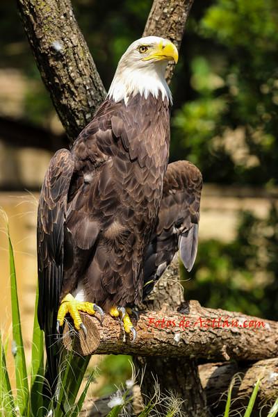 Eagle IMG_1597.jpg