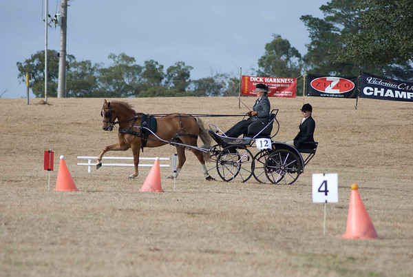 Victorian Carriage Driving Champs - Gallery 8