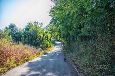 Walk 0265